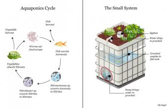 5 Things You Should Take Into Consideration When Building an Aquaponic System