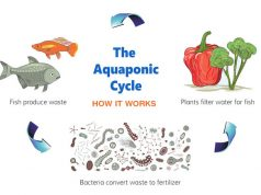 Starting Your Own Aquaponic Business or Hobby