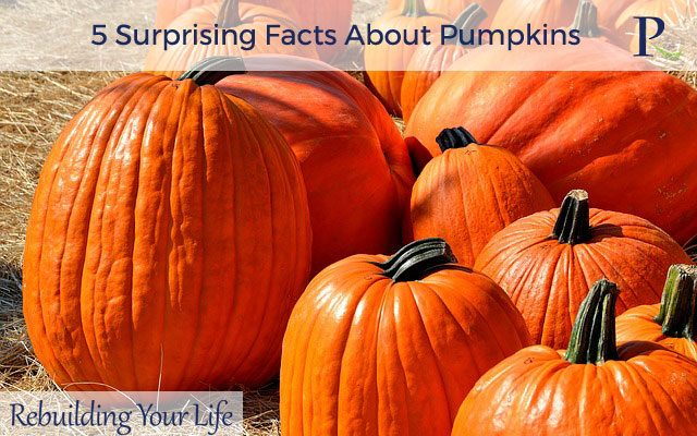 5 Surprising Facts About Pumpkins