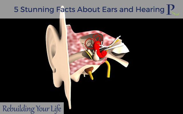 5 Stunning Facts About Ears and Hearing